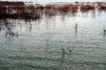 2 Million Gallon Drilling Fluid Spill in Ohio Wetlands